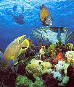 arrecife maya