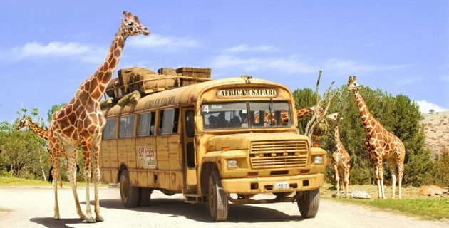 tour africam-safari puebla