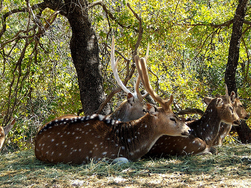 zoologico africam safari animales