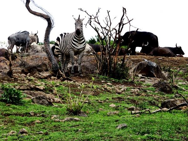 turisticos zoologico guadalajara