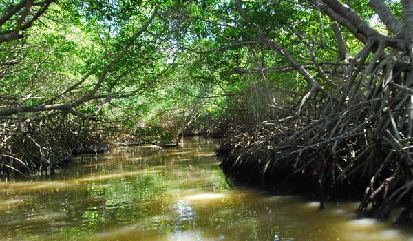manglares celestun-yucatan