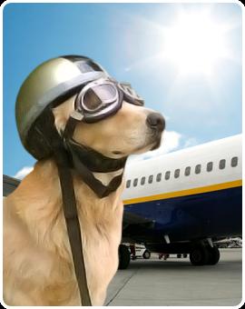 viajar con mascota en avion