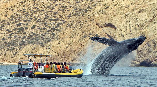 Ballenas tour en los Cabos