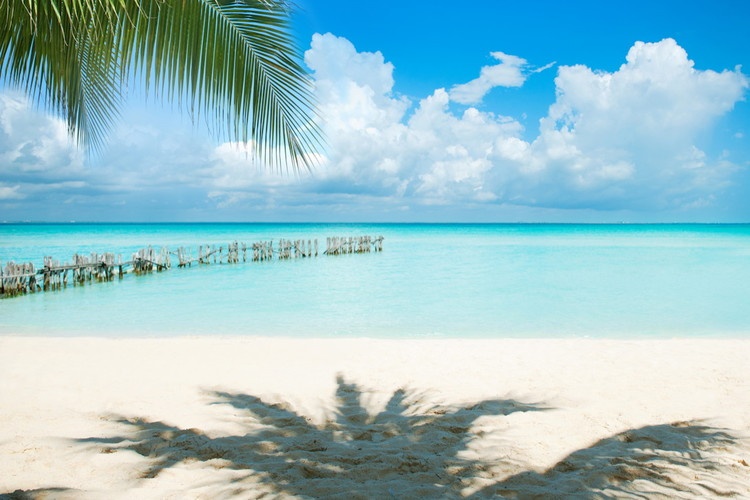 Caribbean Island. Vacation and Tourism concept. Sun and Palms