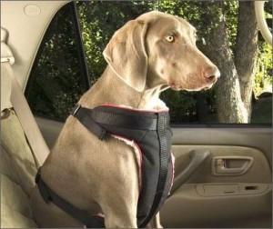 Viajar en auto con tu macota