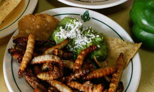 Tacos de Gusano de Maguey