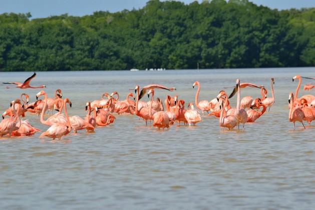 Reserva de la Biofera de Celestun Yucatan
