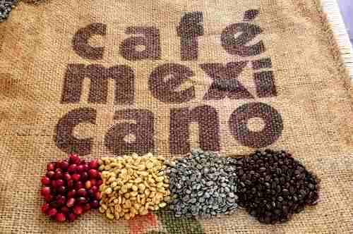 6 Destinos Mexicanos para disfrutar de una buena taza de Café