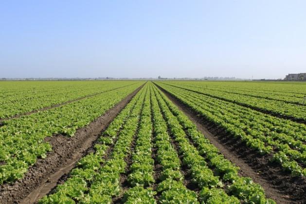 Agricultura mexicana