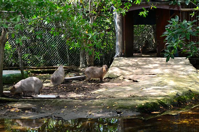 bel air animal park capibaras