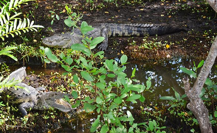 bel air animal park reptiles