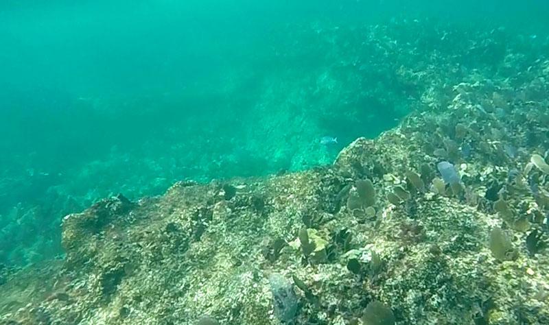 isla mujeres jolly roger arrecife