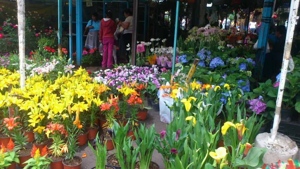 5 Lugares Para Visitar En Xochimilco