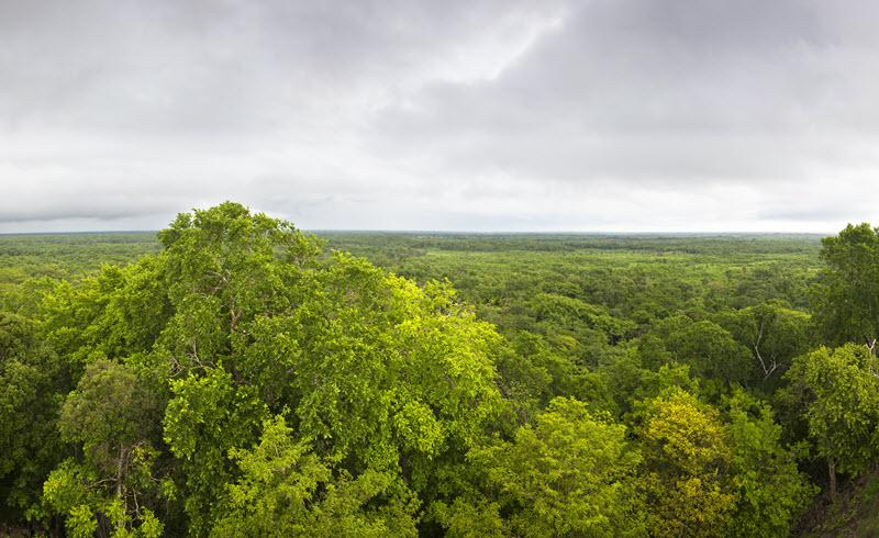 Selva de Yucatan