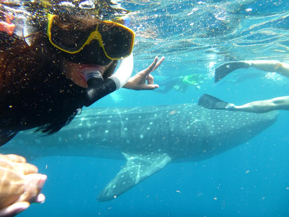 tiburon ballena isla mujeres