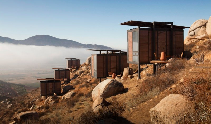 Endemico Valle de Guadalupe BC