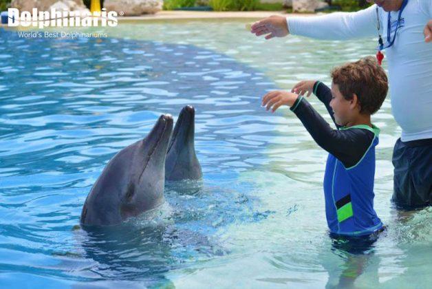 dolphinaris-maravillosa-interaccion-con-delfines