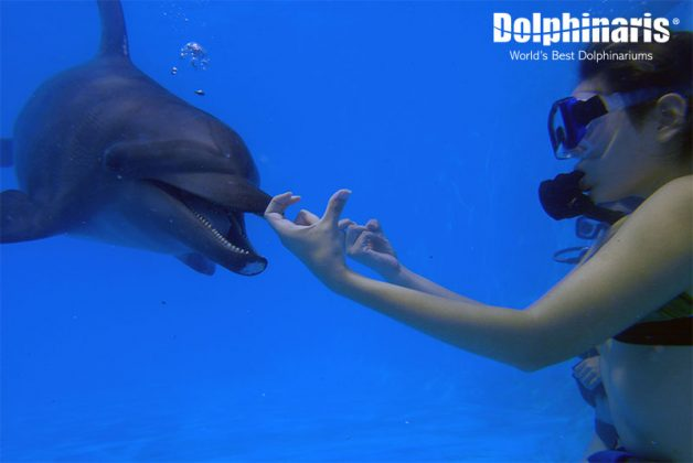 increible-nado-con-delfines-buceo