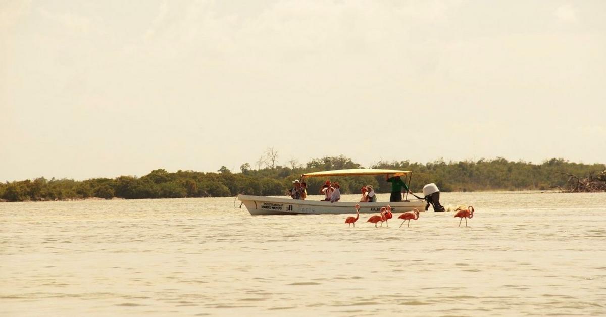 En Lancha por Río Lagartos Yucatan