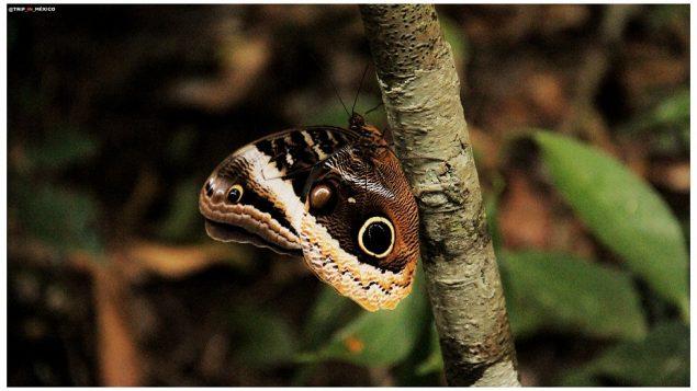 Naturaleza Chiapas