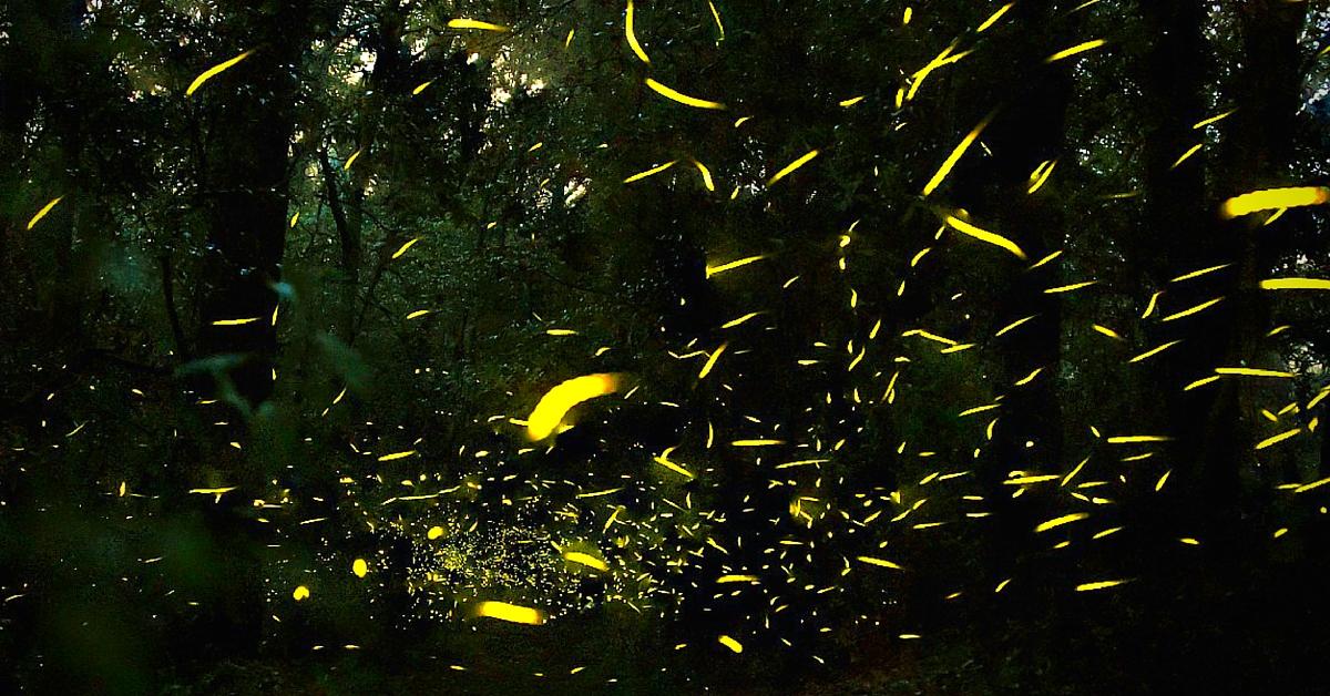 Resultado de imagen de santuario de luciernagas en tlaxcala