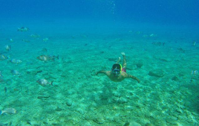 Snorkel Coral Princess Cozumel