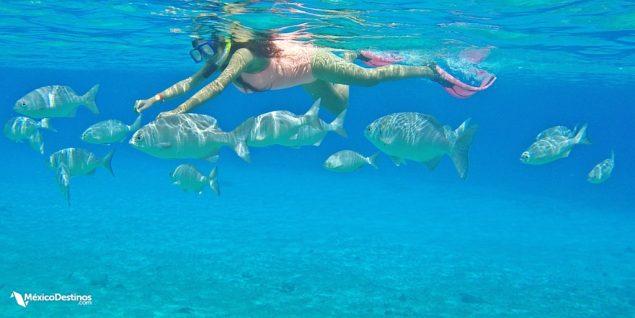 Snorkel Coral Princess Hotel Cozumel