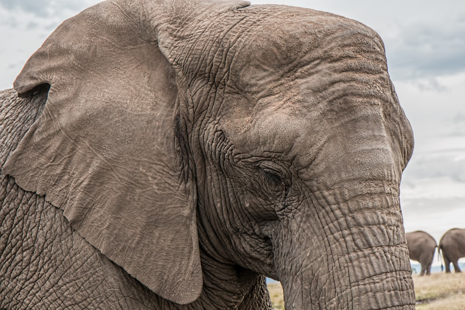 No tomarte selfies con especies en peligro de extinción