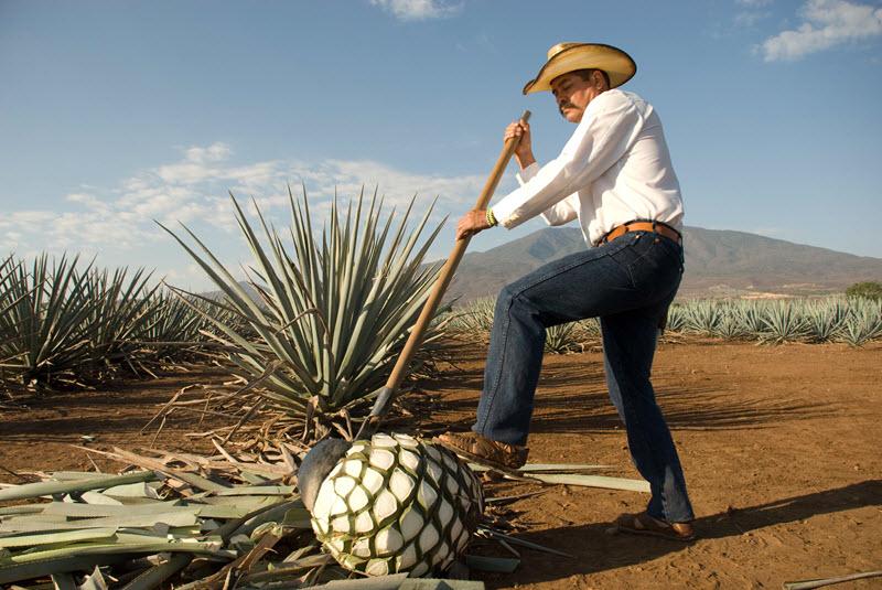 Que visitar en Tequila Jalisco