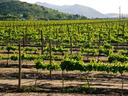 Ruta del Vino Valle de Guadalupe, Baja California Sur