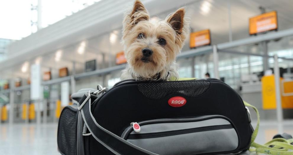 7 Prácticos Consejos para Viajar con tu Mascota en Avión