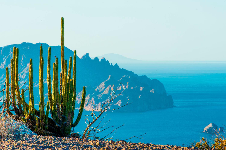 Loreto y Todos Santos: Las Joyas de Baja California Sur