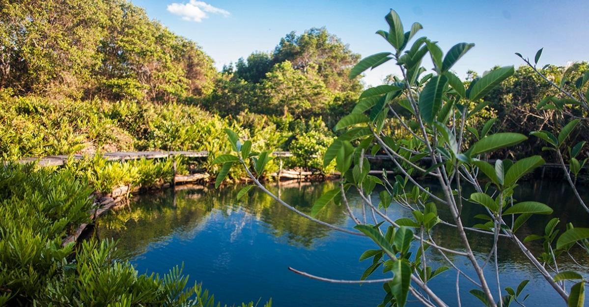 Cenotes y Playas en Yucatán: La Mezcla Perfecta para tu Viaje