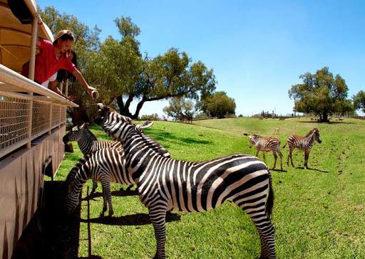 Reino Animal Parque Temático ¿Por qué visitarlo?